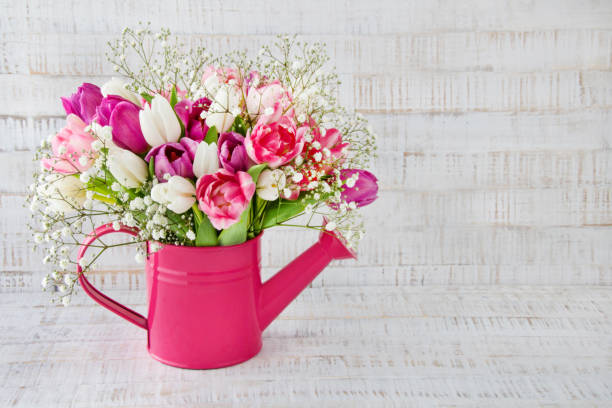 Tulips in a can against wooden background stock photo