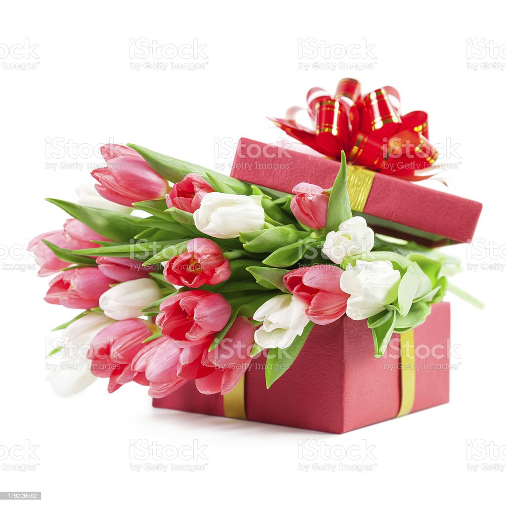 Tulips in a gift box stock photo