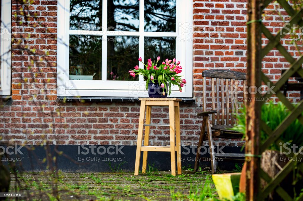 Tulips in a vase in the garden zbiór zdjęć royalty-free