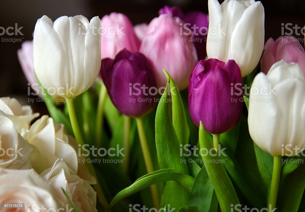 Tulips in a vase stock photo