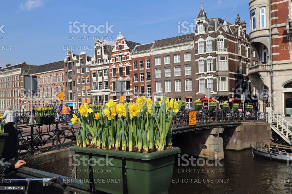 Tulips in Amsterrdam stock photo