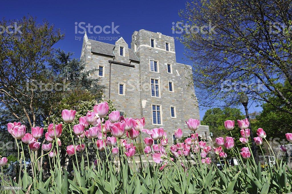 Tulips in Georgetown University stock photo