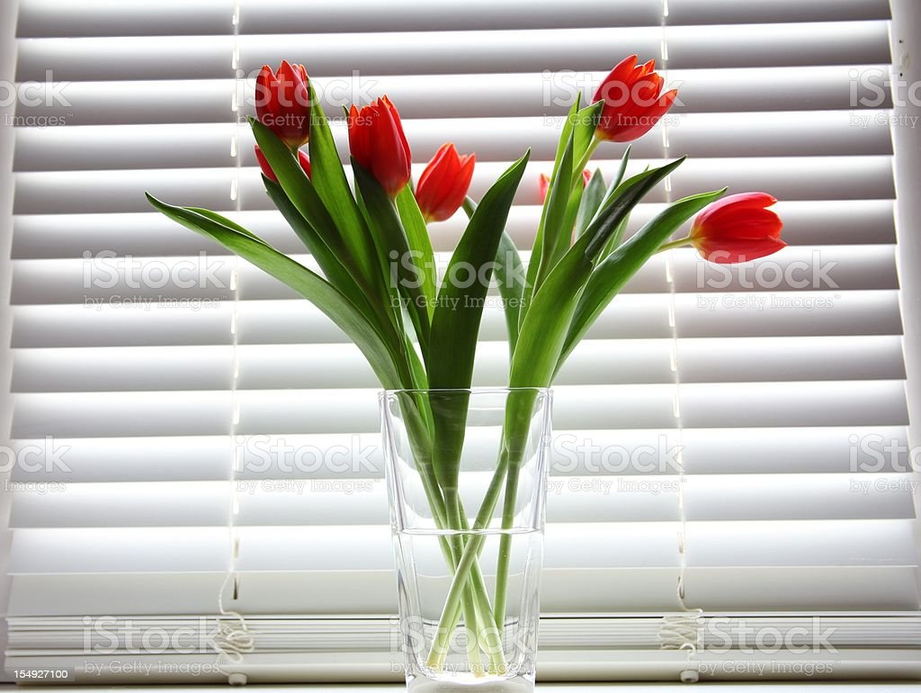 tulips in glass vase against  shutter background royalty-free stock photo