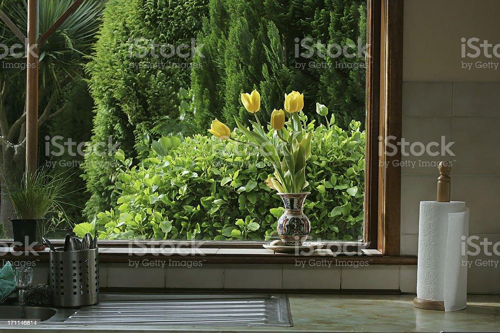 tulips in kitchen window royalty-free stock photo
