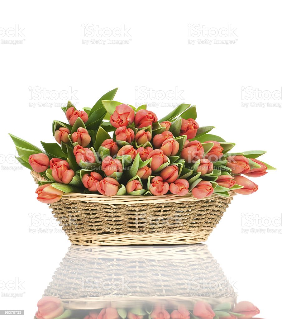 Tulips in the basket royalty-free stock photo