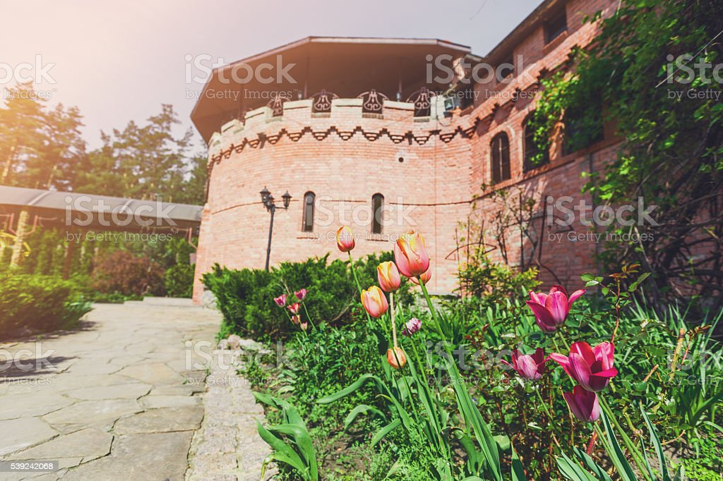Tulips in the garden, landscape design. royalty-free stock photo