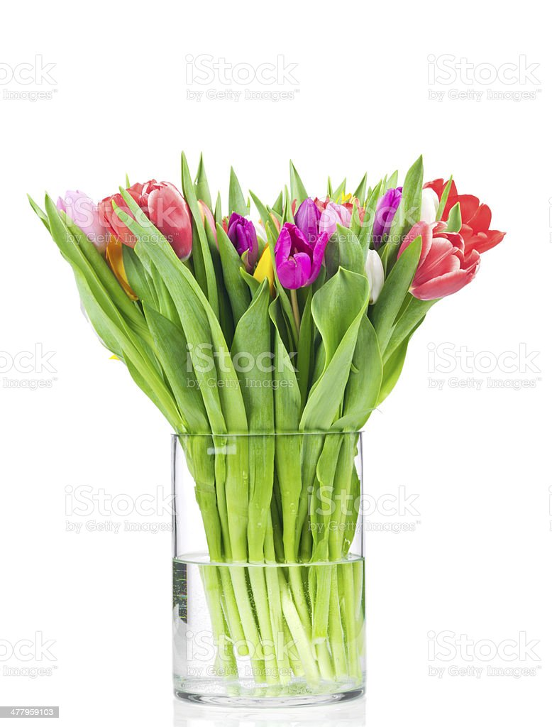 Tulips in the vase stock photo