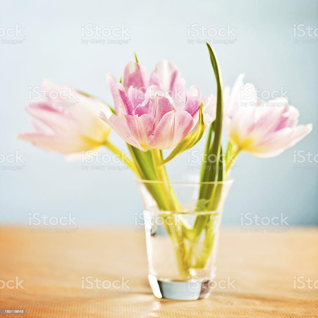 Tulips in vase stock photo