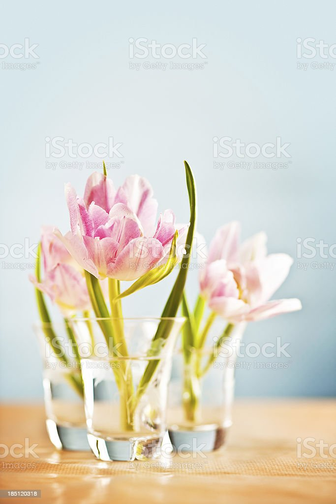 Tulips in vase royalty-free stock photo