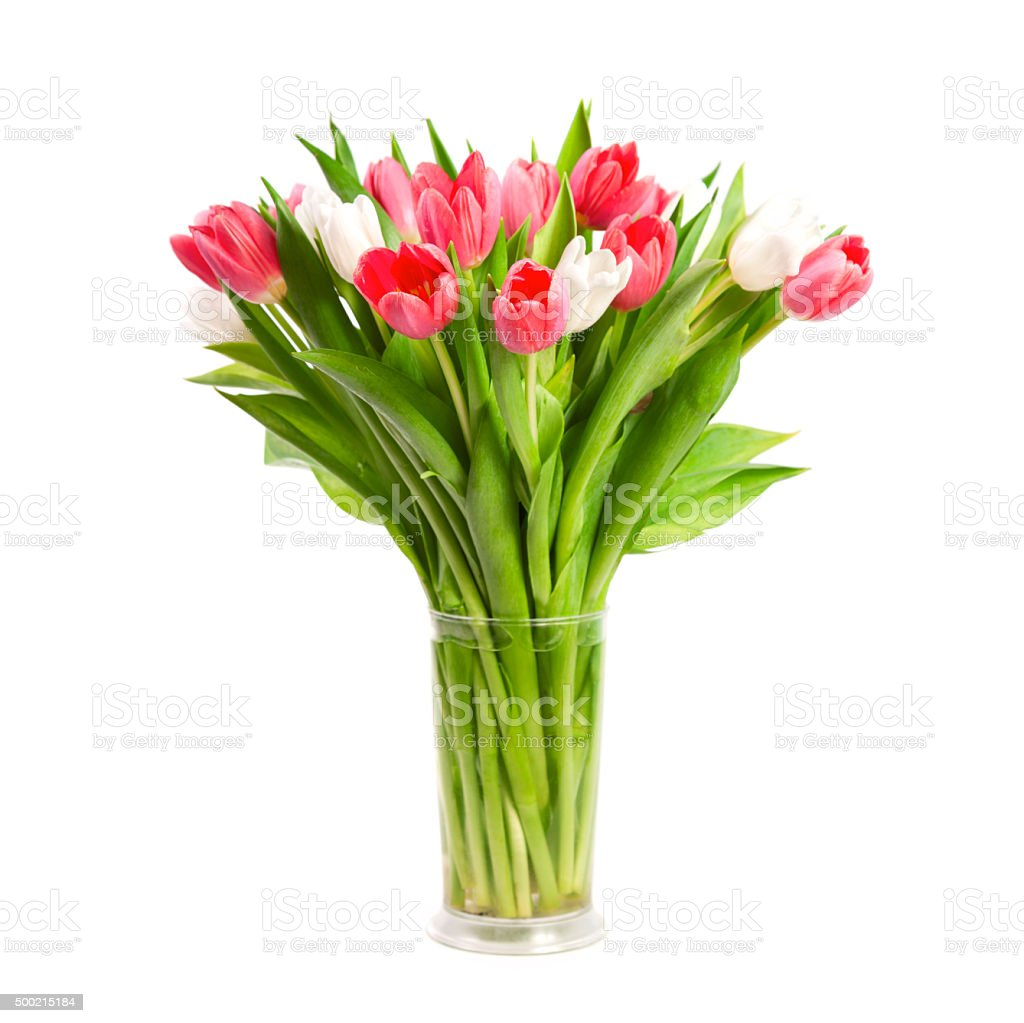 Tulips isolated on white background stock photo