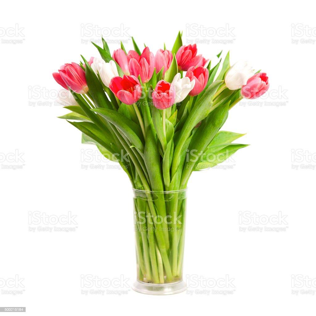 Tulipes isolé sur fond blanc - Photo