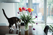 flower, bouquet, domestic cat, dining room