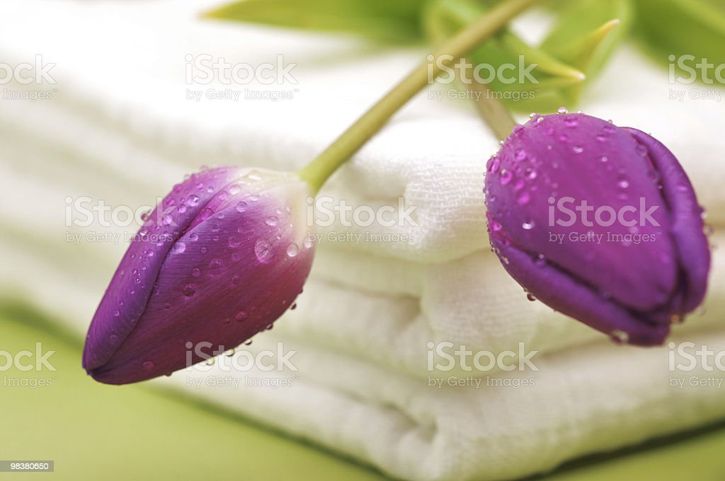 Tulips on Clean Clothes royalty-free stock photo