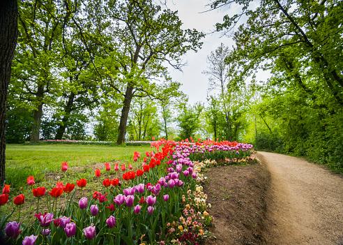 Tulips on display (Pralormo, Piedmont, Italy)