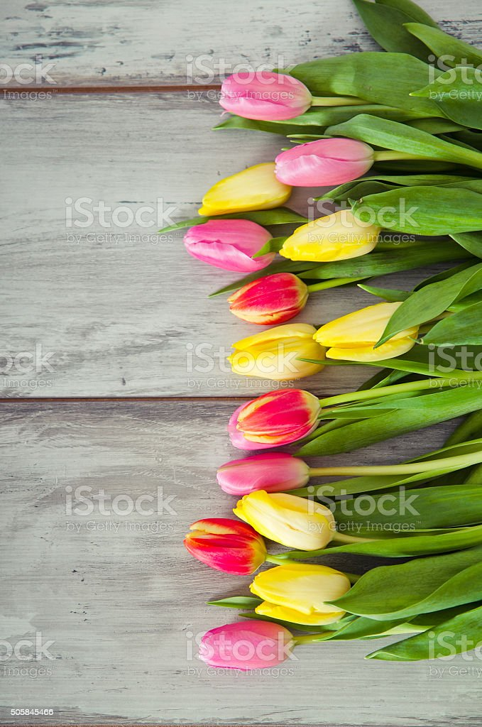 tulips  on the wood stock photo