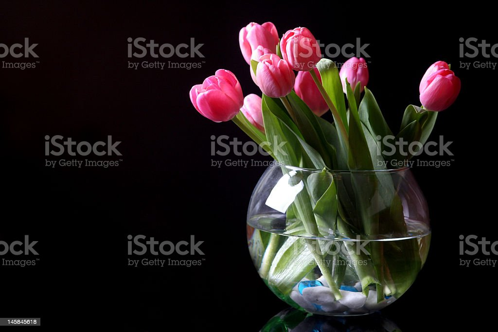 tulips royalty-free stock photo