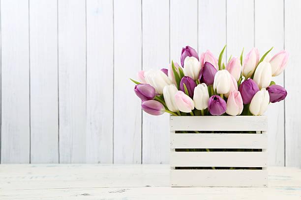 Tulips picture id468158866?b=1&k=6&m=468158866&s=612x612&w=0&h=h5qx1z0ulum26atzdhb9cd7syroejlfp4o7oldclgsg=