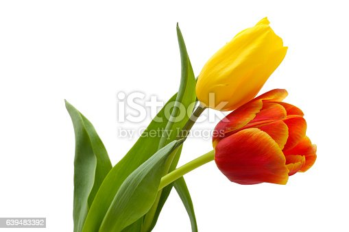 Bouquet from two tulips: yellow and red.