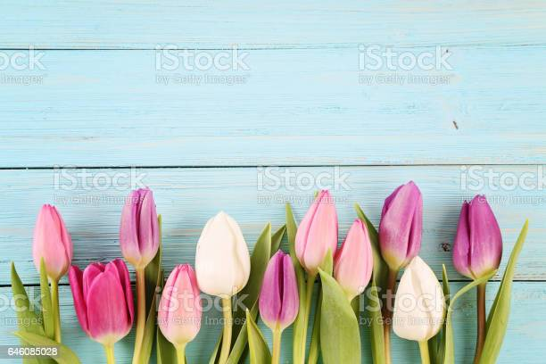 Tulips picture id646085028?b=1&k=6&m=646085028&s=612x612&h=cv2gfokpimyeimrxc34lrmn5pnucdp lanur viovcw=