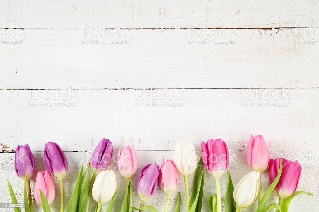 Tulpen  – Foto