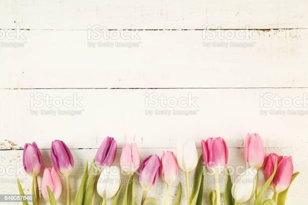Tulips picture id646087846?b=1&k=6&m=646087846&s=612x612&h=nnc4xvki58cozlbmui378iqd6hlvh7hiq3g7aerkfh0=