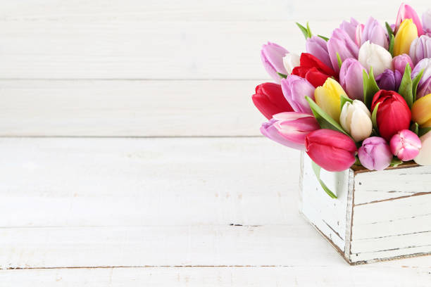 tulips - foto stock