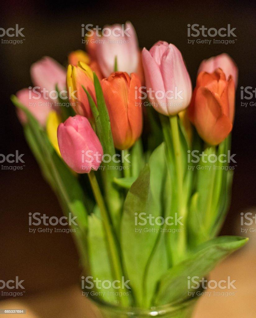 Tulips foto de stock royalty-free