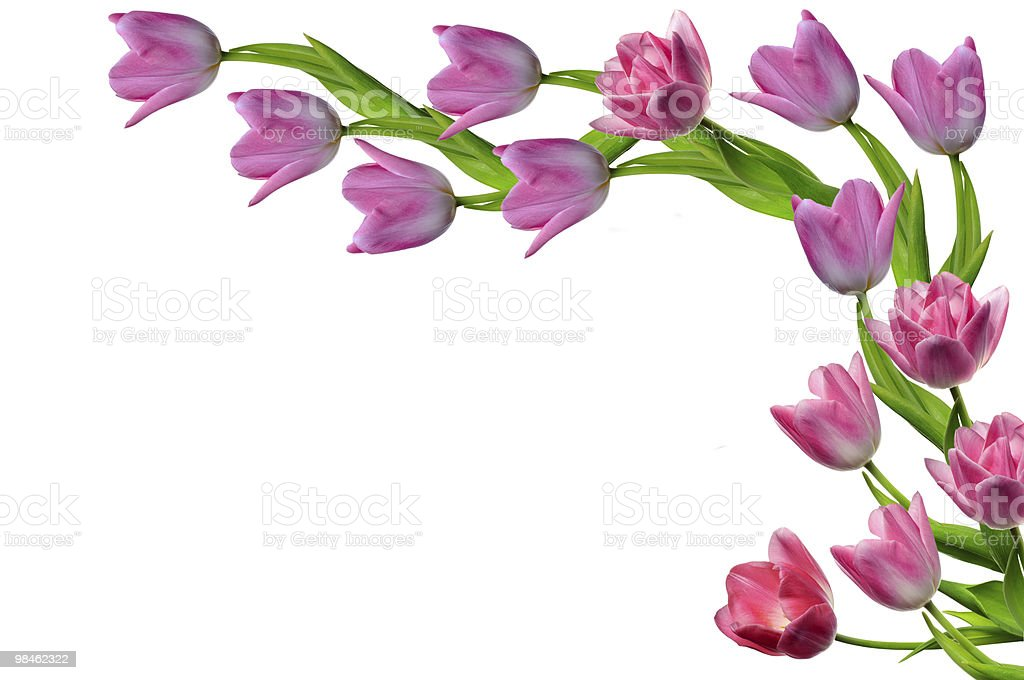 Tulipani foto stock royalty-free