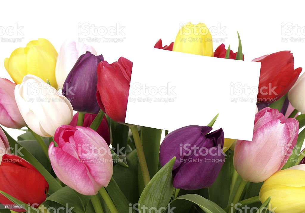 Tulips with Card on White royalty-free stock photo