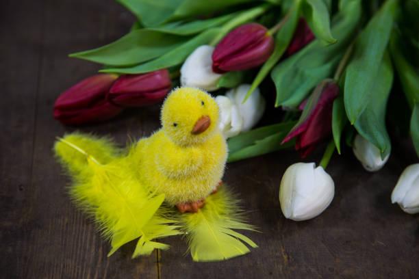 tulipanes con chick, fondo madera - lunes de pascua fotografías e imágenes de stock