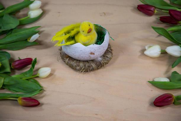 tulipanes con polluelos en el medio, madera de fondo - lunes de pascua fotografías e imágenes de stock