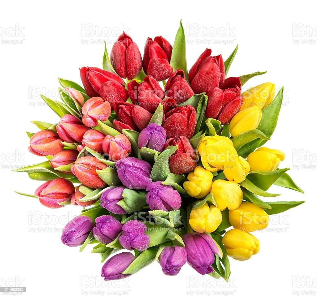 Tulips with water drops. Spring flowers red, pink, yellow stock photo