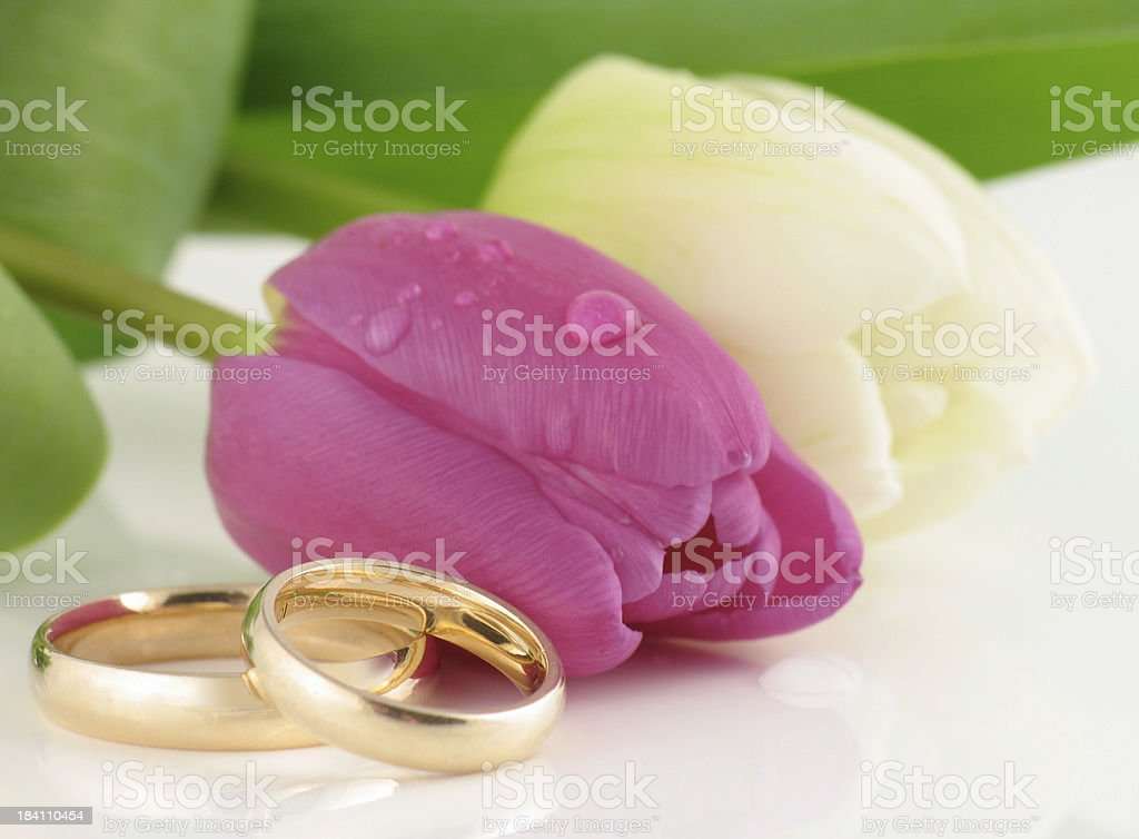 Tulips with Wedding Bands royalty-free stock photo
