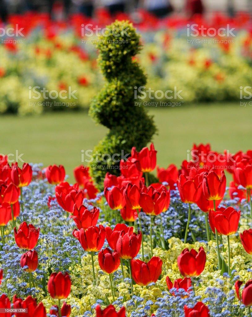 Tulpen in Hyde Park, London stock photo