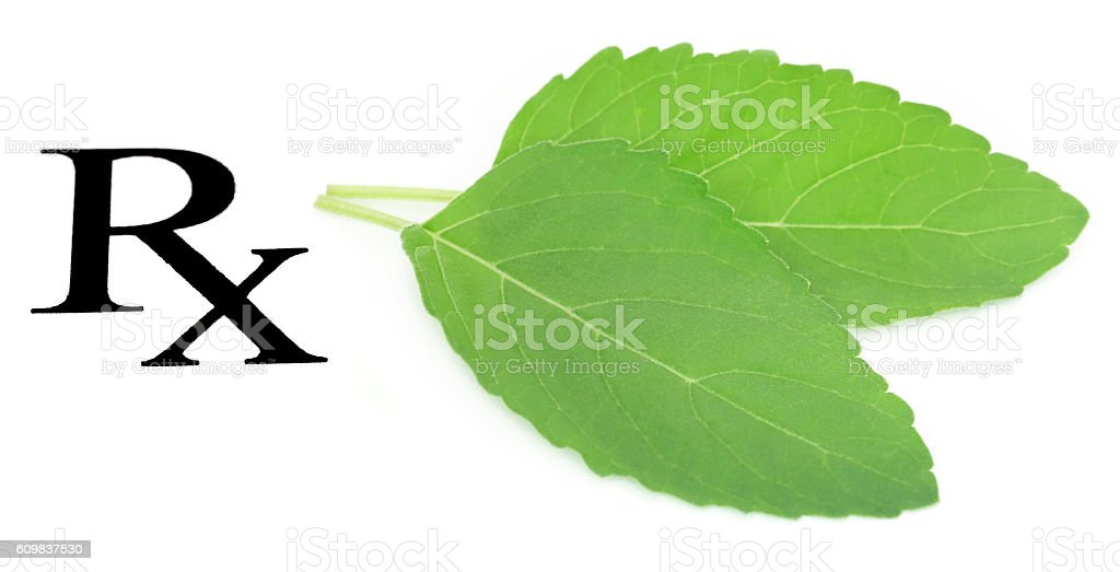 Tulsi leaves as medicine stock photo