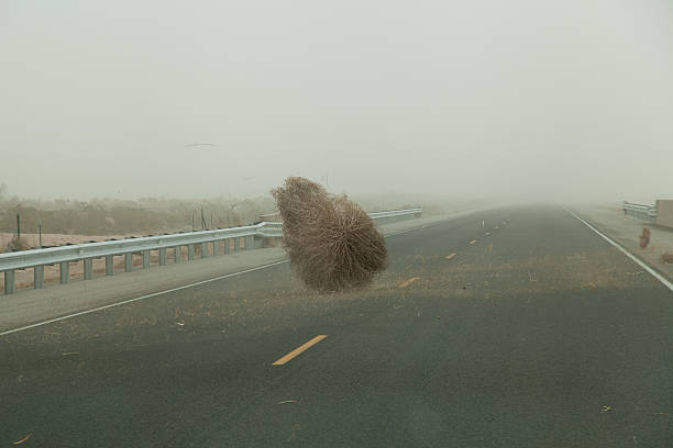 Tumble weed in a dust storm stock photo