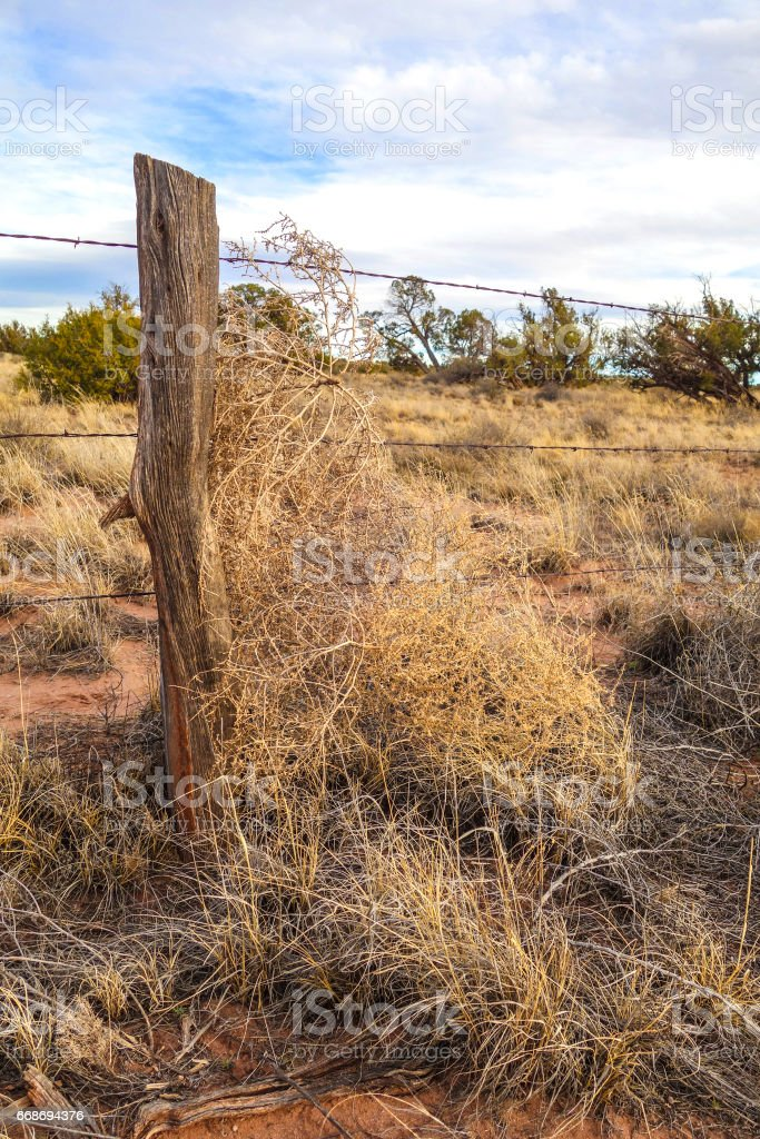 Tumbleweed and barbed wire stock photo