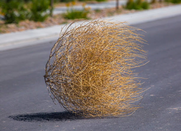tumbleweed-n-the-center-of-a-residential