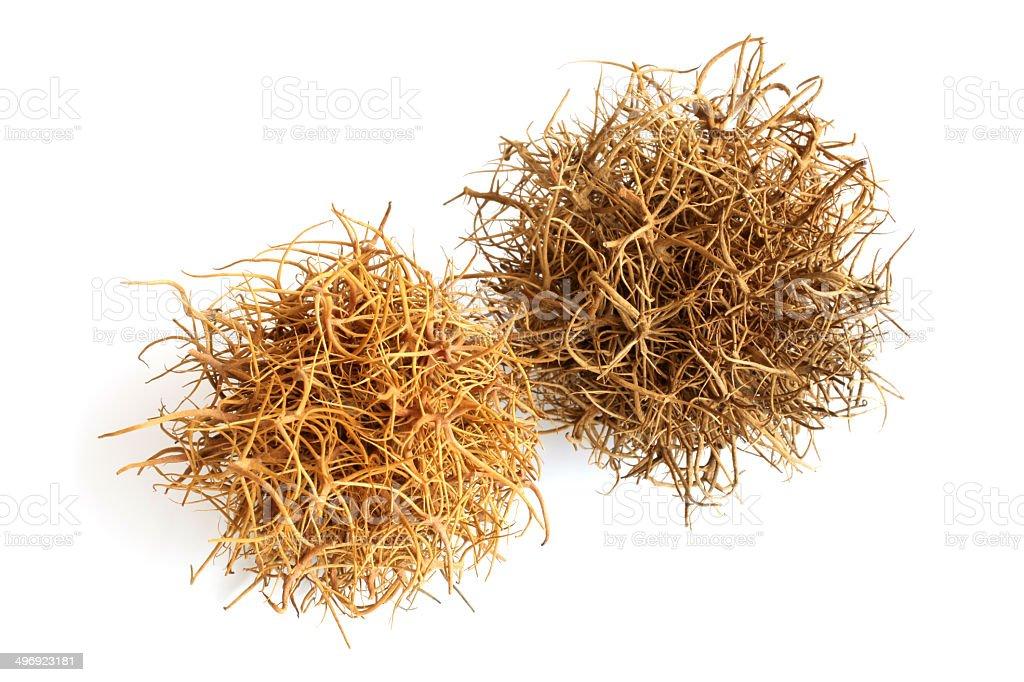 Tumbleweed on  white background stock photo
