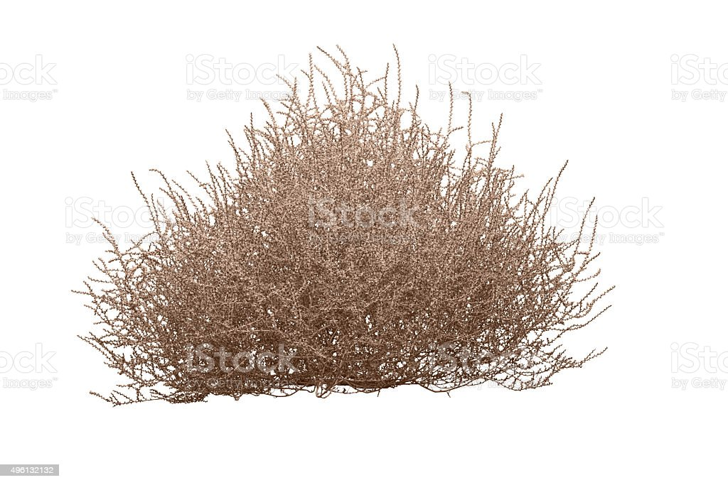 Tumbleweed siolated on white with clipping path stock photo