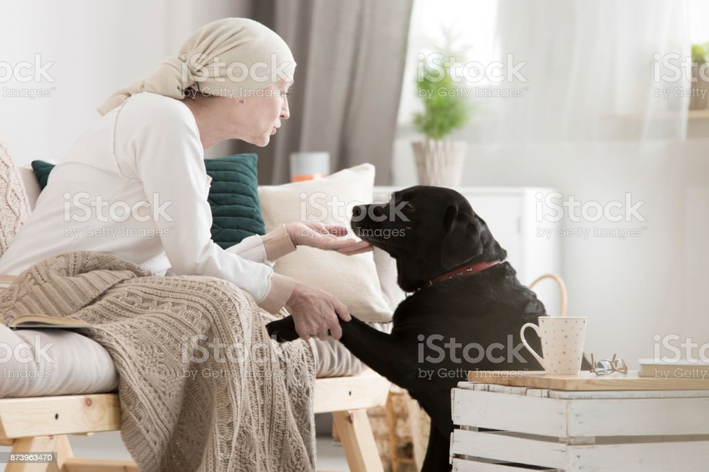 Tumor patient caressing her dog stock photo