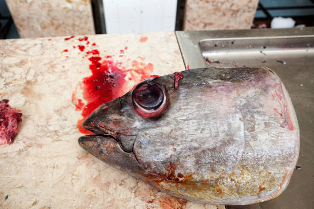 thunfisch auf dem fischmarkt. funchal, madeira - kochinsel stock-fotos und bilder