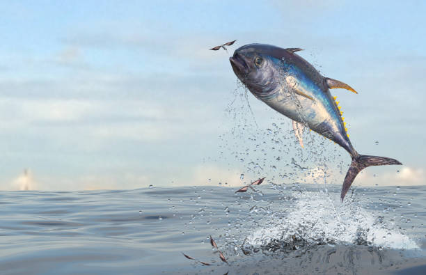 Tuna fish jumping to catch flying fishes in ocean 3d Render stock photo