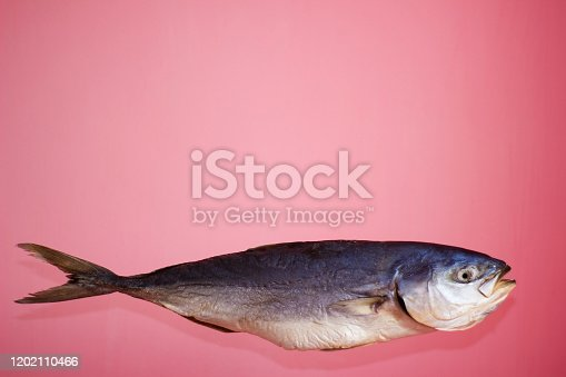 156872766 istock photo Tuna fish on a pink background, salted dried - isolate 1202110466
