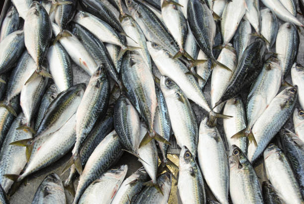 Thunfisch – Foto