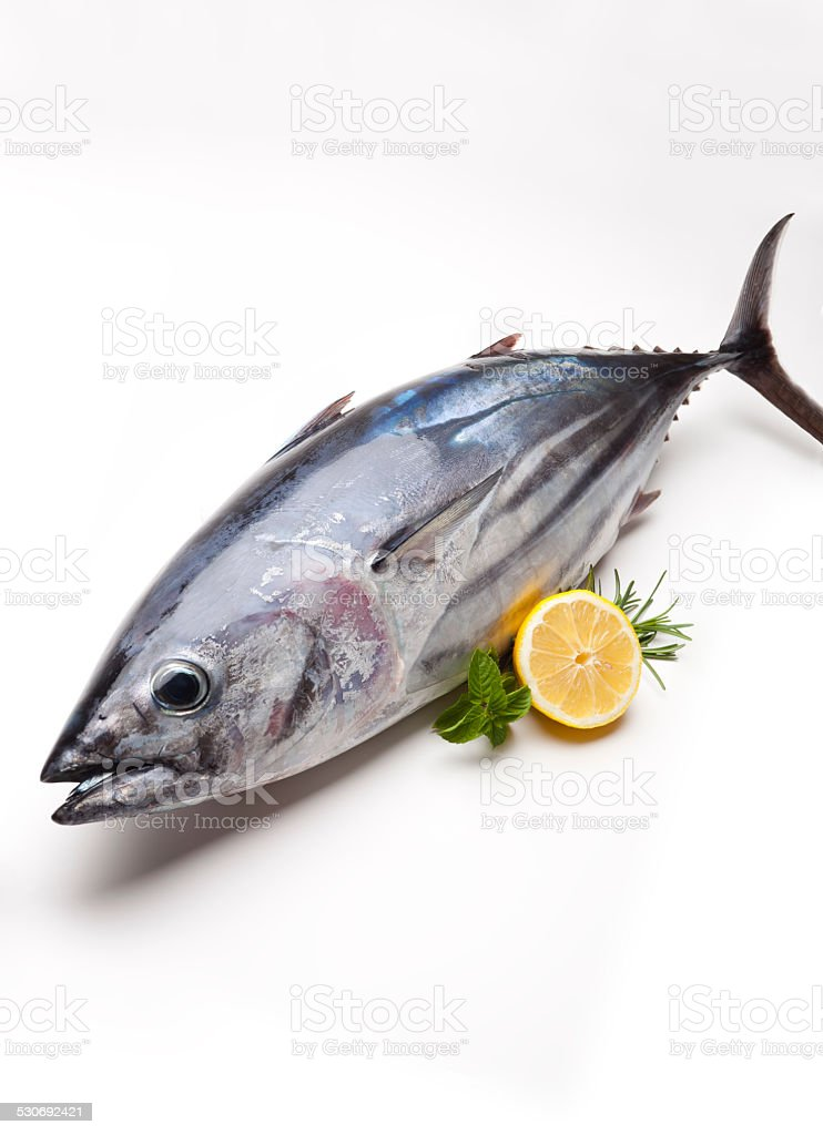 Tuna fish. stock photo