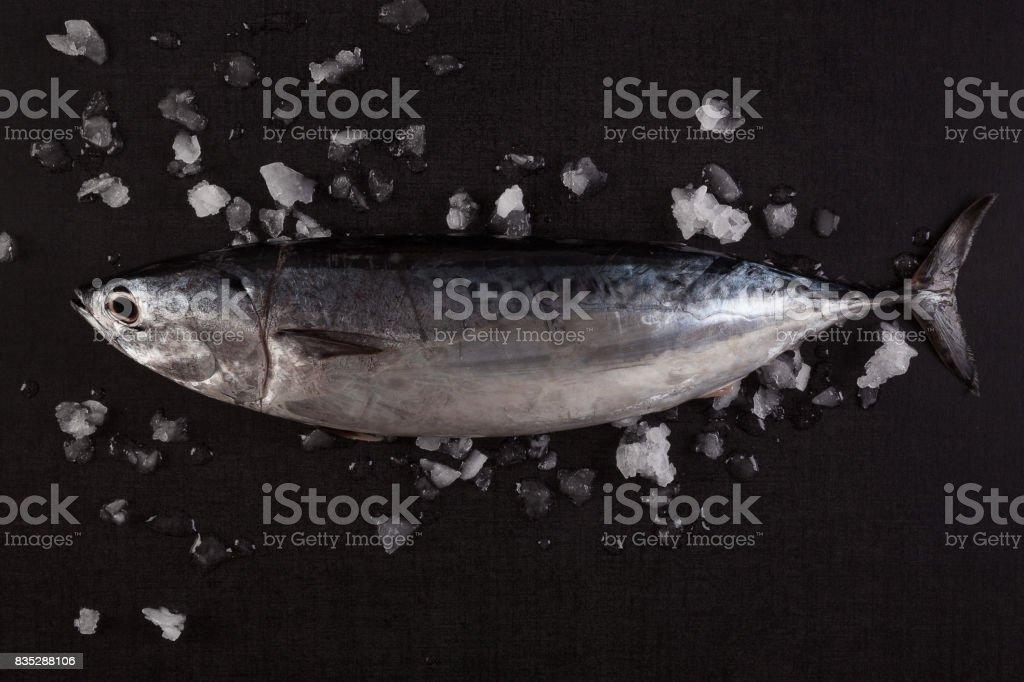 Tuna fish. stock photo
