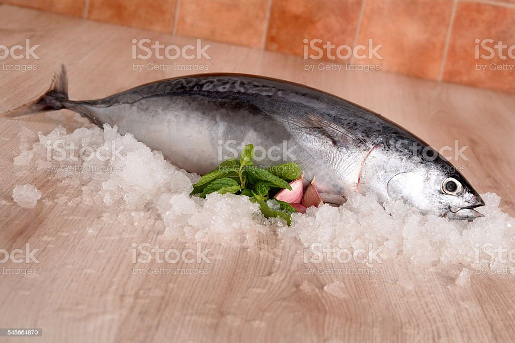 tuna longline stock photo