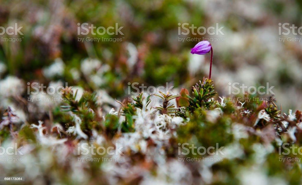 Tundra cover stock photo