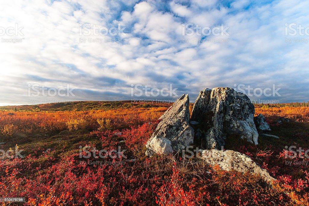 Tundra fall colors stock photo